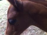 Losing his foal fur at 5 weeks - 21 July 2010