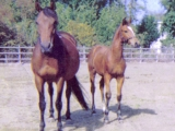 Aero as a foal with his mum