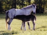 Maggie with Bart as a foal