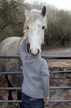 Silly horses runner up
