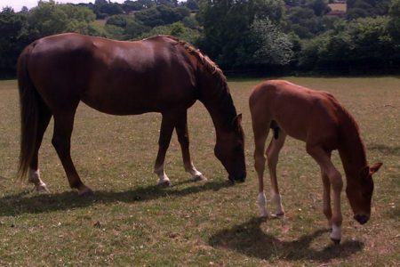 Rainbow and her colt Micky